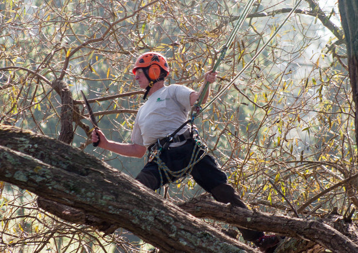 Channel Island Tree Services Ltd
