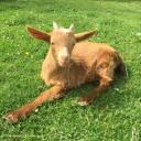 Jerriaise D'Or Goat Farm