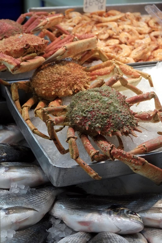Jersey Food Festivals